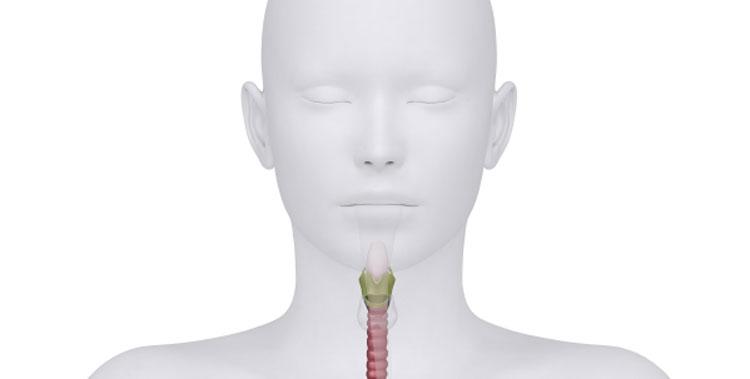Mischlysate in der Organextrakt-Therapie