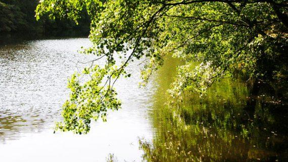 Baum und Wasser